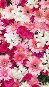 iPhone wallpaper flowers   Обои iPhone wallpapers ...