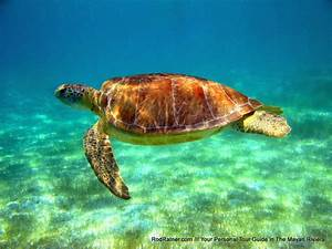 Snorkel with Turtles - Private Tours in Playa del Carmen ...