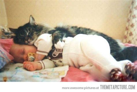 14 Funny Cats Protecting And Sleeping With Babies