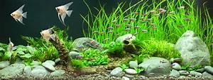 Aquarium Gestaltung Bilder : sch ner schwimmen neue trends f rs aquarium my fish ~ Lizthompson.info Haus und Dekorationen
