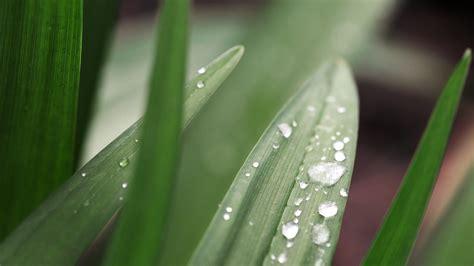dew drops pictures leaves - HD Desktop Wallpapers | 4k HD