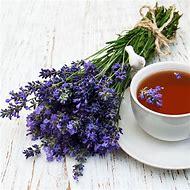 Ellagance Lavender Plants