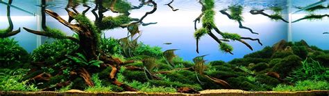 Aquascape Tree by Aga Aquascaping Contest Delivers Stunning Freshwater Views