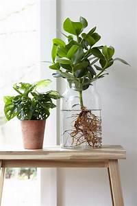 Anthurie Im Wasser : s lyckas du med odlingen inomhus 7 heta tips flores y masetas pinterest water plants ~ Yasmunasinghe.com Haus und Dekorationen
