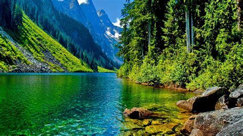 landscape forest wallpaper hd  baltana