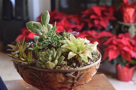 culture indoor quelques conseils pour r 233 ussir jardin d int 233 rieur meuble et d 233 coration