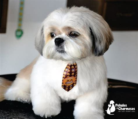 groomer whats  puppy cut