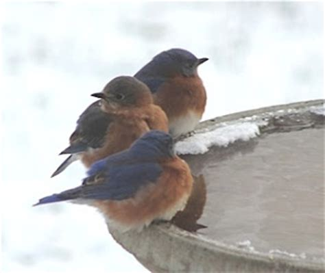 wild birds unlimited birds are the best part of winter
