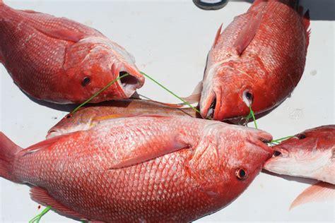 pensacola snapper beach florida fishing sea deep fl caught king entertainer charter