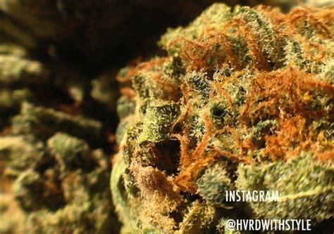 red headed stranger strain marijuana strain reviews allbud
