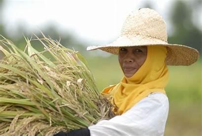 Farmers Happy Rice Ibon