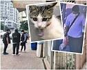 深水埗偷貓仔案 警鎖定疑犯居界限街登樓搜查 | 多倫多 | 加拿大中文新聞網 - 加拿大星島日報 Canada Chinese News