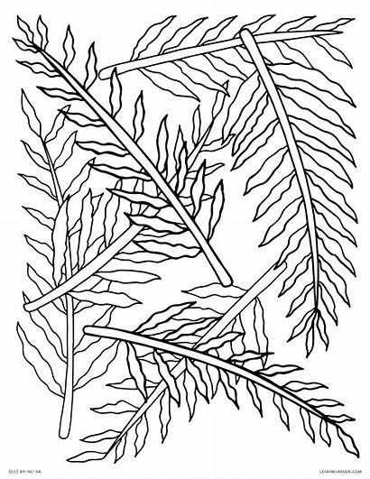 Coloring Fern Pages Nature Pattern Ferns Tree
