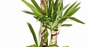 Le piante da appartamento più belle, ecco come curarle Tutto per Lei