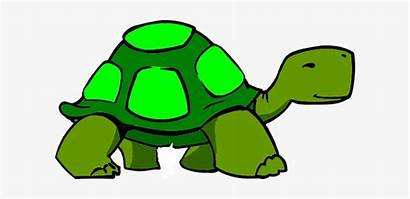 Turtle Clipart Clip Clker Background Transparent Nicepng