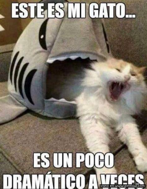 este es mi gato es un poco dram 225 tico a veces memes en