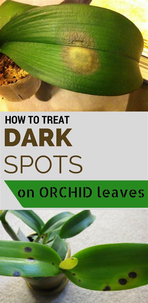 treat dark spots  orchid leaves getgardentipscom