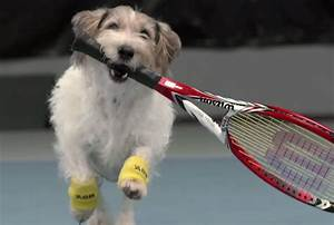 On Puppy Day, Just A Bunch of Tennis Players with Their ...