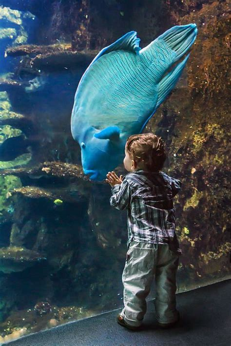 best 20 nausicaa aquarium ideas on