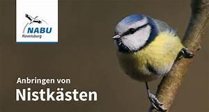 Nistkasten Aufhängen Himmelsrichtung : aufh nge und reinigungsanleitung f r singvogelnistk sten naturschutzbund nabu ravensburg e v ~ Watch28wear.com Haus und Dekorationen