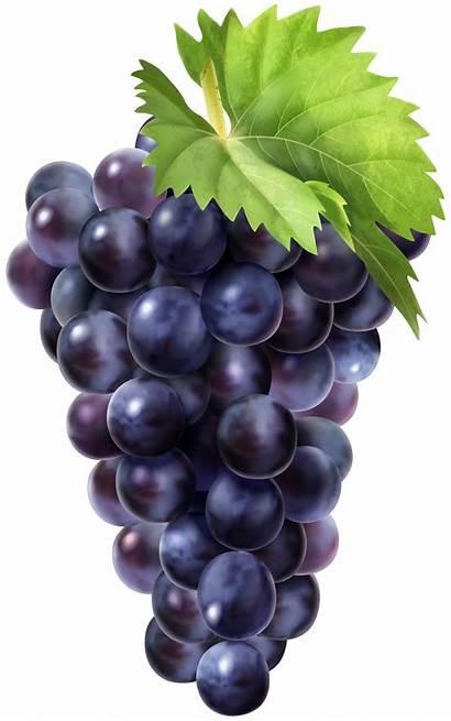 Grapes Clip Fruit Grape Clipart Transparent Yopriceville