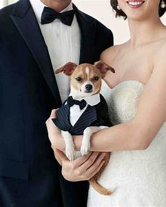 1000+ images about Glamorous Pets on Pinterest | Shops Swarovski crystals and Safety