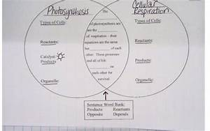 32 Diagram Of Photosynthesis And Cellular Respiration