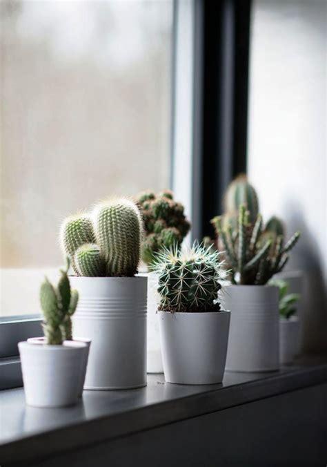 die beliebtesten kaktus arten fuer den innenraum