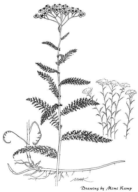 medicinal plant files  genus