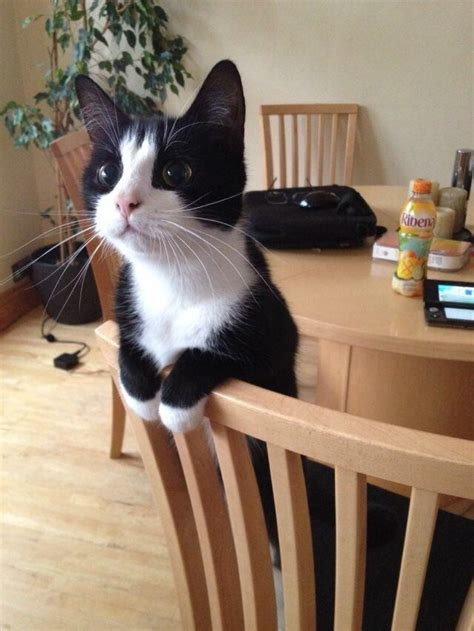 realise kitty reddit cute adopt cats might thanks aww