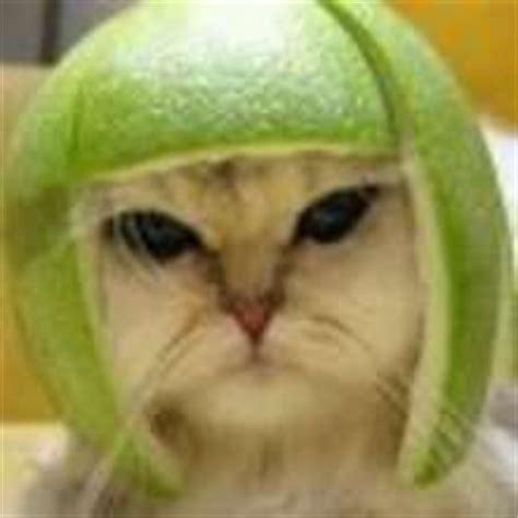 funny cats video   kids hellokidscom
