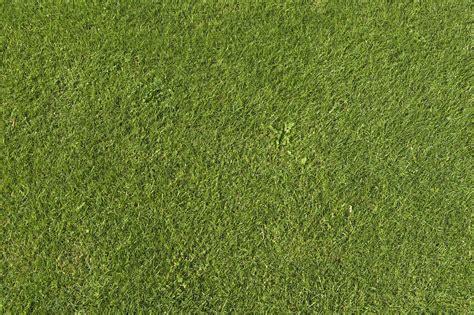 of grass green grass background texture download photo green grass texture