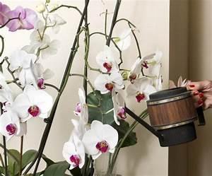 Comment Soigner Une Orchidée : comment arroser une orchid e jardinier paresseux ~ Farleysfitness.com Idées de Décoration