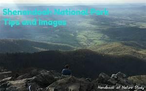 Shenandoah National Park – Tips and Images