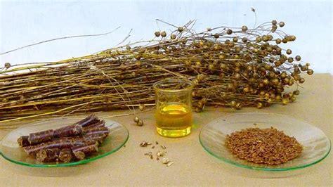 Linu eļļa. Augu produkta lietderīgās īpašības un ...