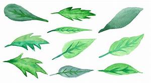 Watercolor Green Leaves Green Leaf Green Leaf PNG Image