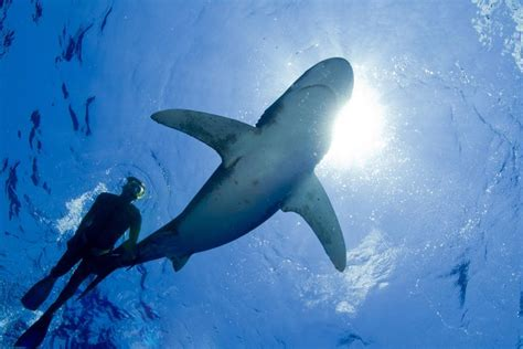 dangers of scuba diving with sharks