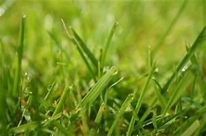 Löcher Im Rasen Ausbessern : kleine runde l cher im rasen wer war 39 s maus oder igel ~ Lizthompson.info Haus und Dekorationen