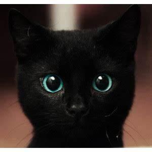 black kitten | Tumblr - Polyvore