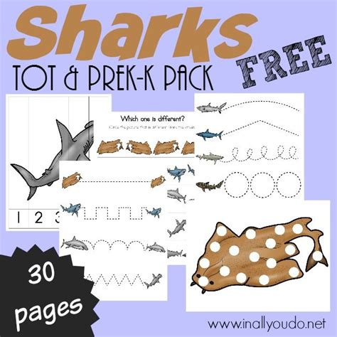 preschool shark song best 25 shark activities ideas only on shark 651