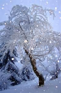 Peaceful Snow Scene