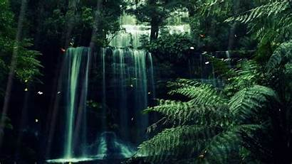 Forest Animated Mystical Mystic Screensaver Source
