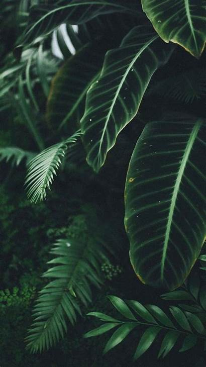 Desktop Aesthetic Tablet Backgrounds Plant Wallpapers Pc