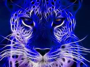 electric cat electric blue wallpapers wallpaper cave