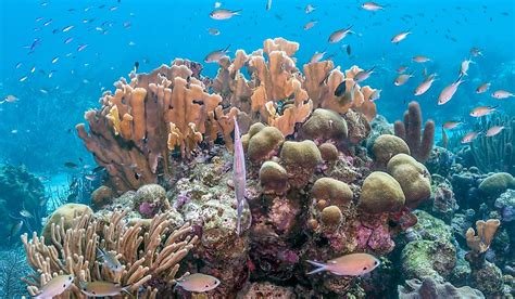 What Is The Conservation Status Of The World's Reef-Building Corals? - WorldAtlas