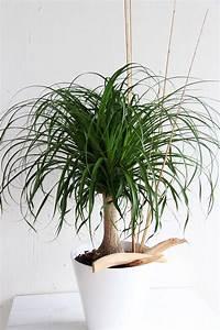 Grande Plante Verte : grande plante verte il tait une fleur ~ Premium-room.com Idées de Décoration