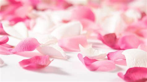 Pink Flowers Wallpapers Hd