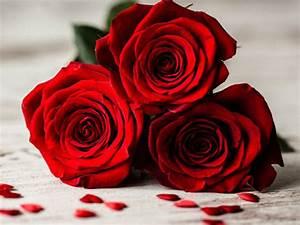Gelb Rote Rosen Bedeutung : die bedeutung von roten rosen welche rosenfarbe hat welche ~ Whattoseeinmadrid.com Haus und Dekorationen