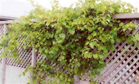 green fence designs plants  beautify garden design