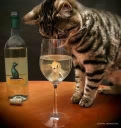 cat wine cat wine meow meow wine meow meow